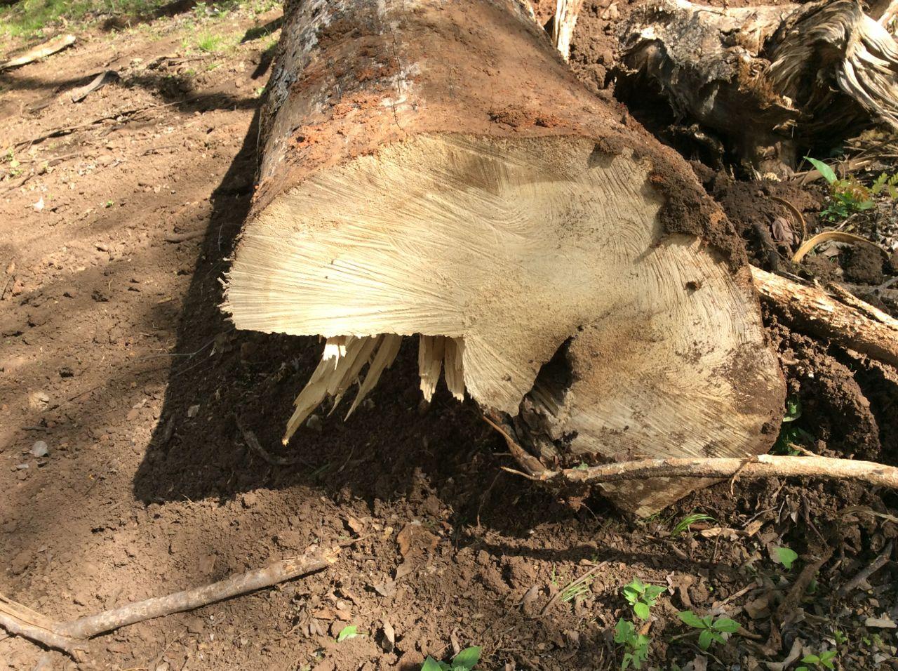 Melina trunk 2
