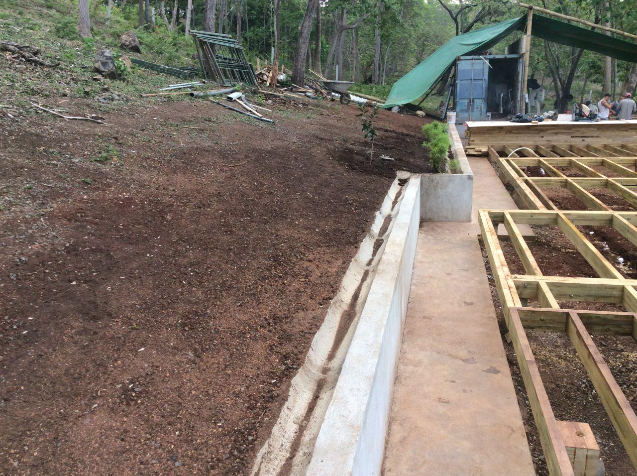 Planting hillside