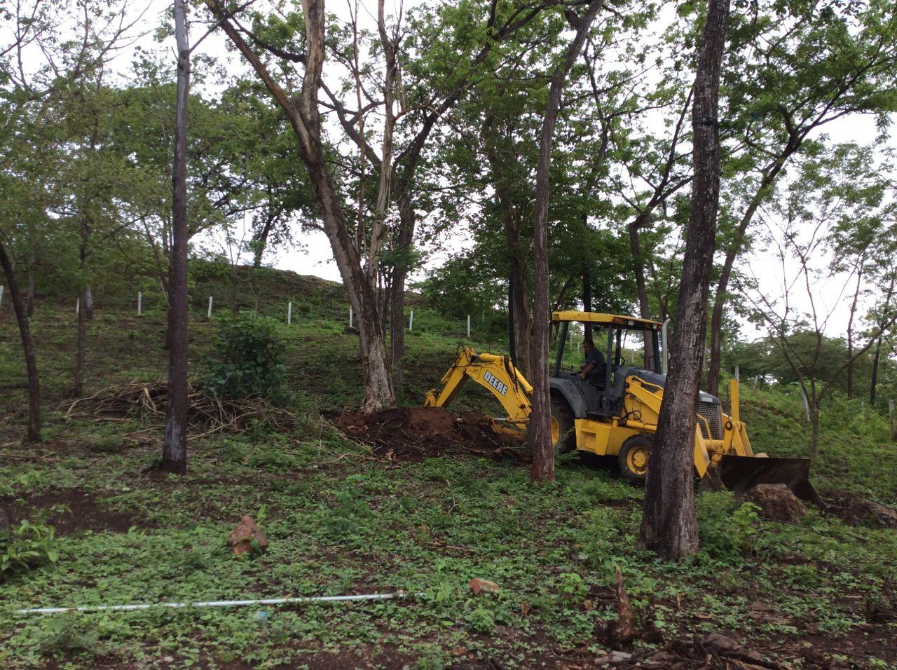 Taking down last dead tree