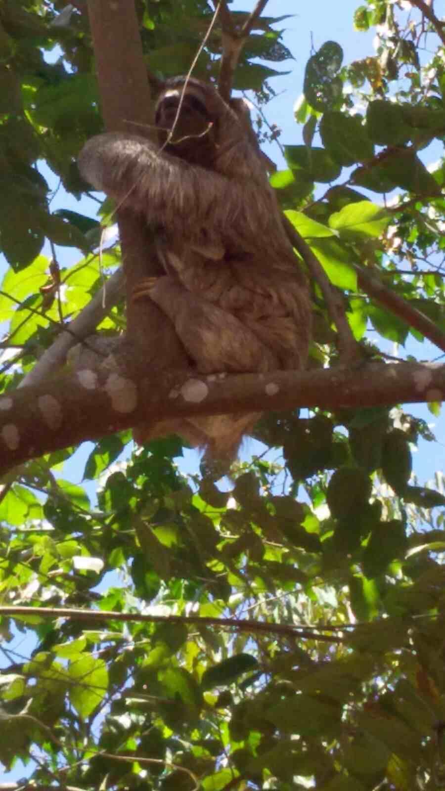 Sloth mama face